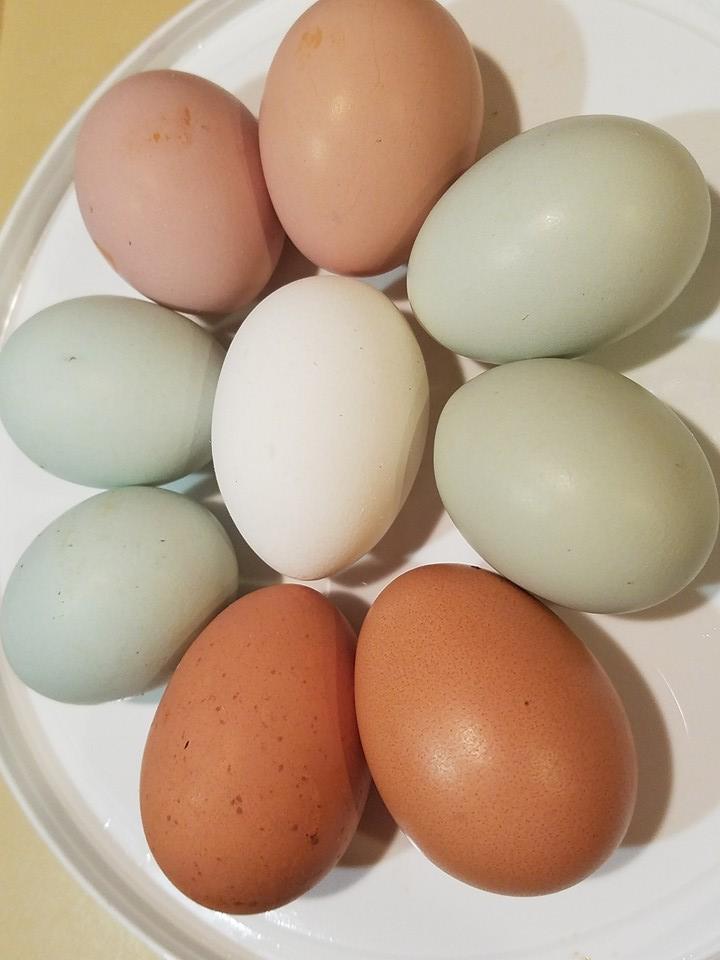 farm-fresh-free-range-non-gmo-organic-feed-dozen-eggs