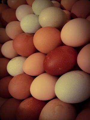 1-dozen-non-gmo-pasture-raised-chicken-eggs-assorted-sizes-m-xl-colors