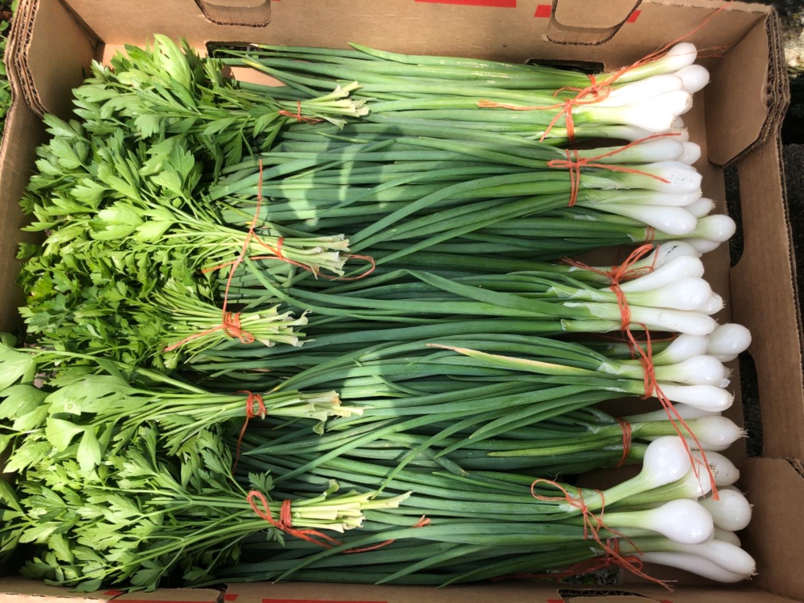 onions-scallions