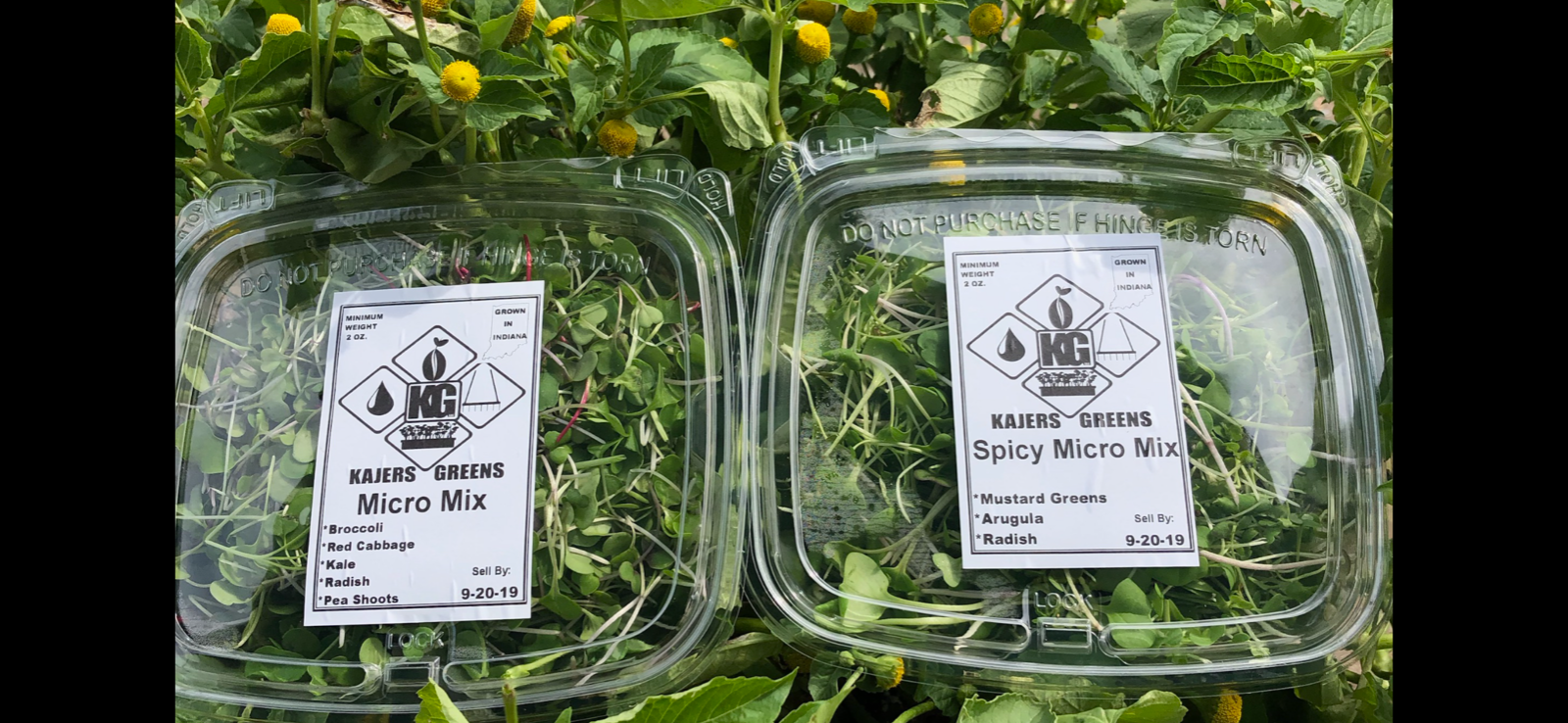 2-micro-green-salad-mixes-