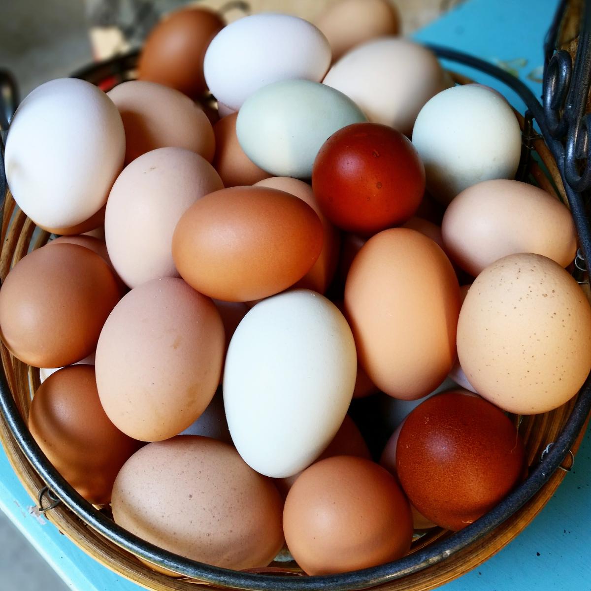 freerange-nongmo-chicken-eggs-1-dozen
