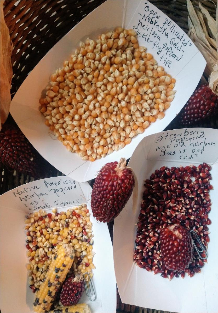 popcorns-family-pkg-3-kinds