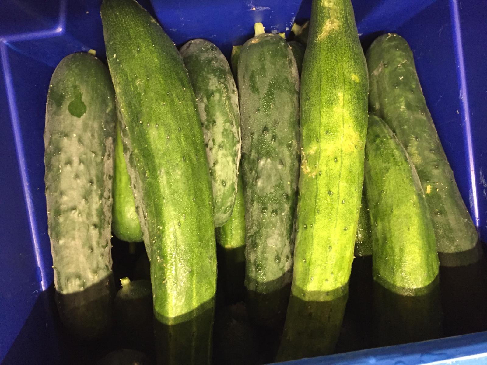 cucumbers-1