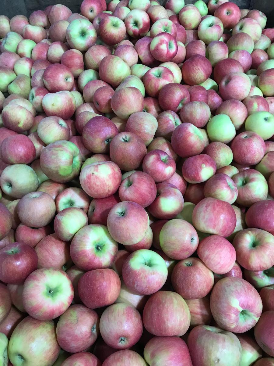 michigan-premier-honey-crisp-apples-3-lb-bag