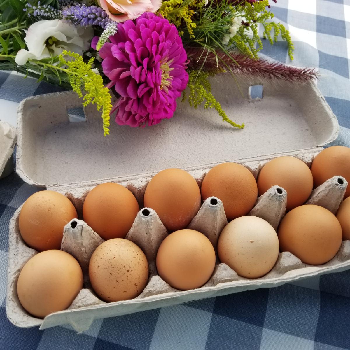 free-range-chicken-eggs-1-dozen