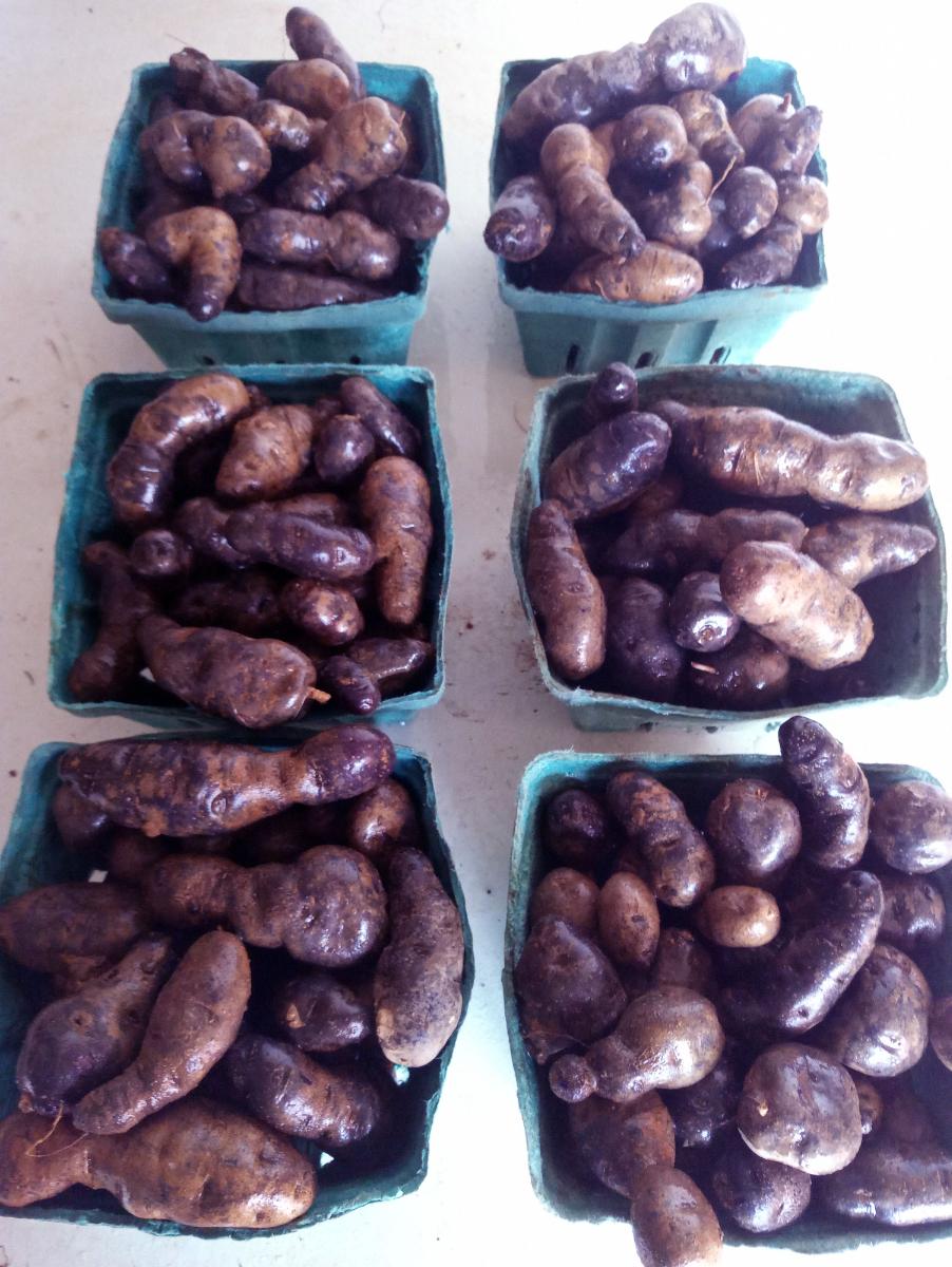 purple-fingerling-potatoes-2-lb-3