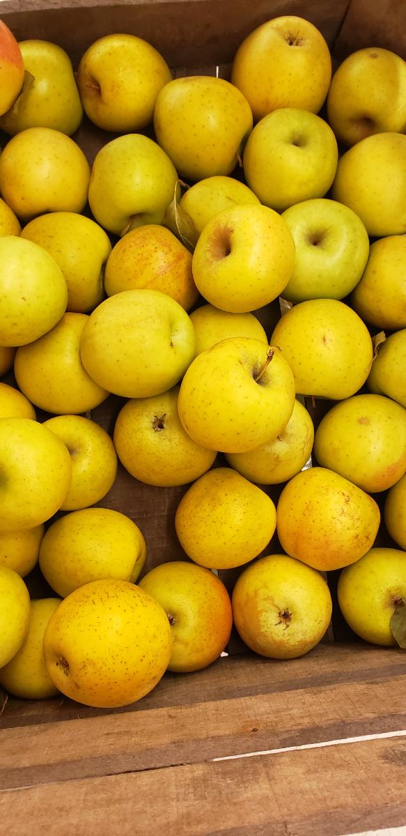 apples-gold-rush-quart-