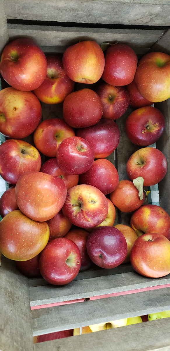 apples-melrose-quart-