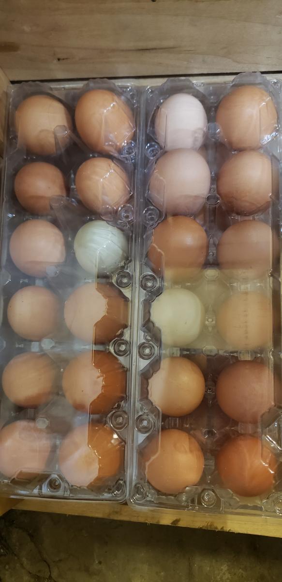 dozen-of-farm-fresh-eggs