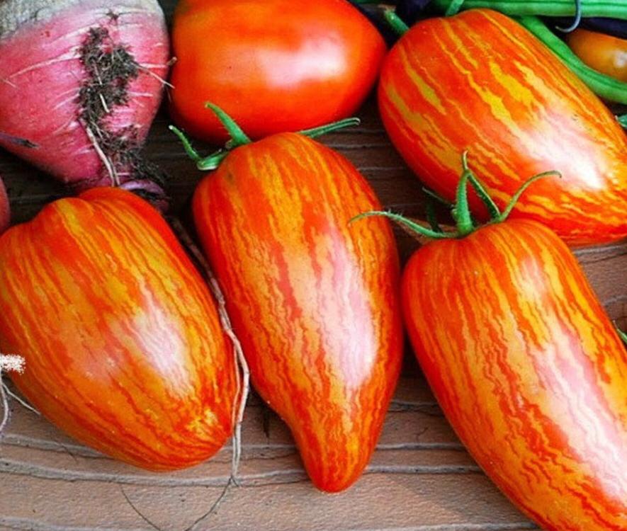 15ct-striped-roma-tomato-seeds