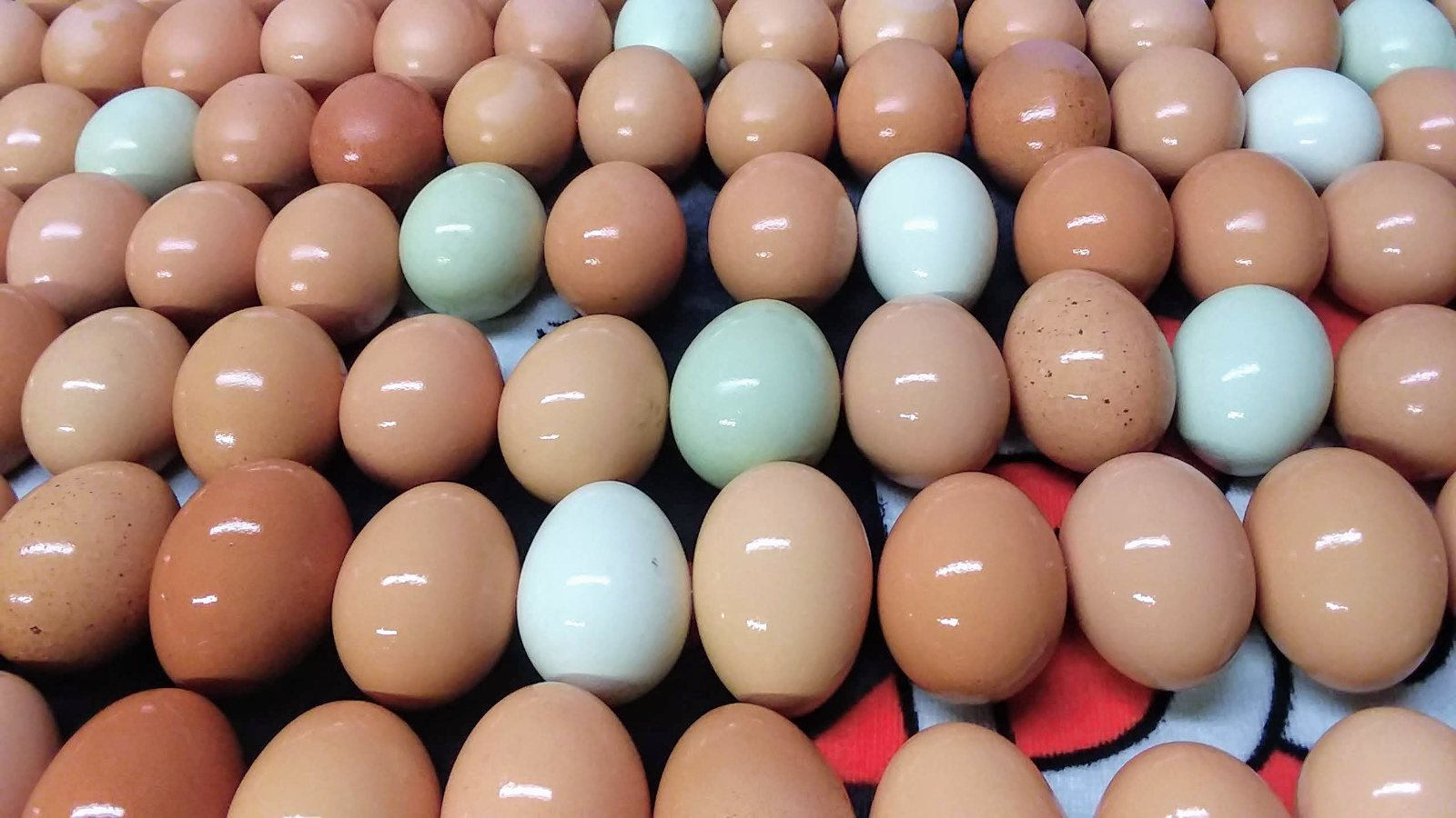 pasture-raised-organic-eggs
