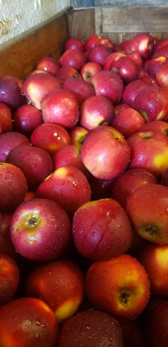 apples-crimsoncrisp-qaurt-