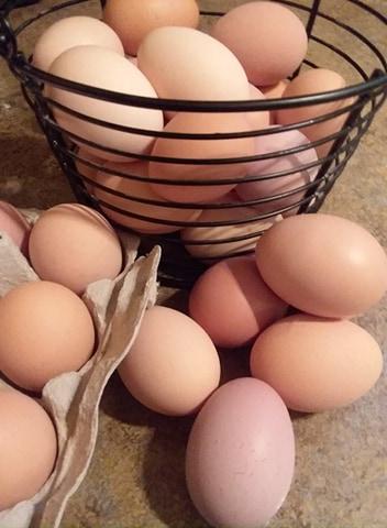free-range-organic-eggs